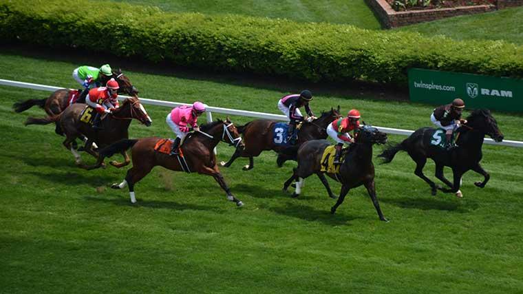 赛跑在丘吉尔的六匹马在草击倒。