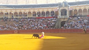 Bull Fight Sevilla, Spain